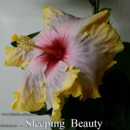 080 - Sleeping Beauty.jpg