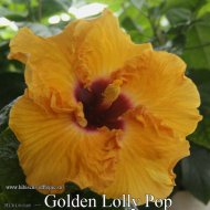 165 - Golden Lolly Pop.jpg